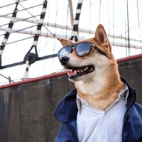 menswear dog ciudad urban nuñezz de arenas