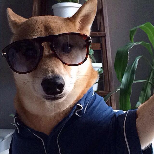 menswear dog selfie nuñez de arenas